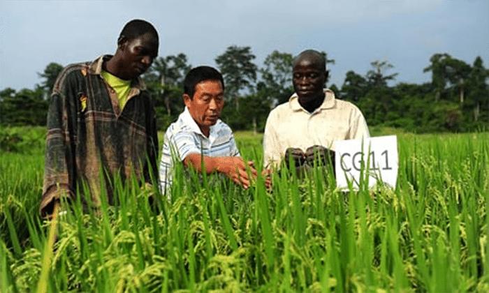 Article : Les centres de démonstration agricoles chinois en Afrique : étude de cas en Côte d'Ivoire