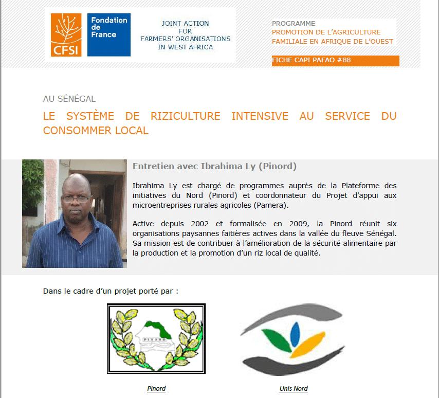 Entretien : Le système de riziculture intensive au service du consommer local au Sénégal