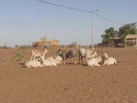 Bulletin de surveillance pastorale - Niger - décembre/janvier 2019