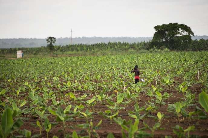 Tribune : L'Afrique aussi doit consommer local !
