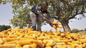 Audio : L'agro-industrie est-elle l'avenir du développement en Afrique?