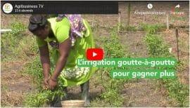 Vidéo : Togo - L'irrigation goutte-à-goutte pour gagner plus