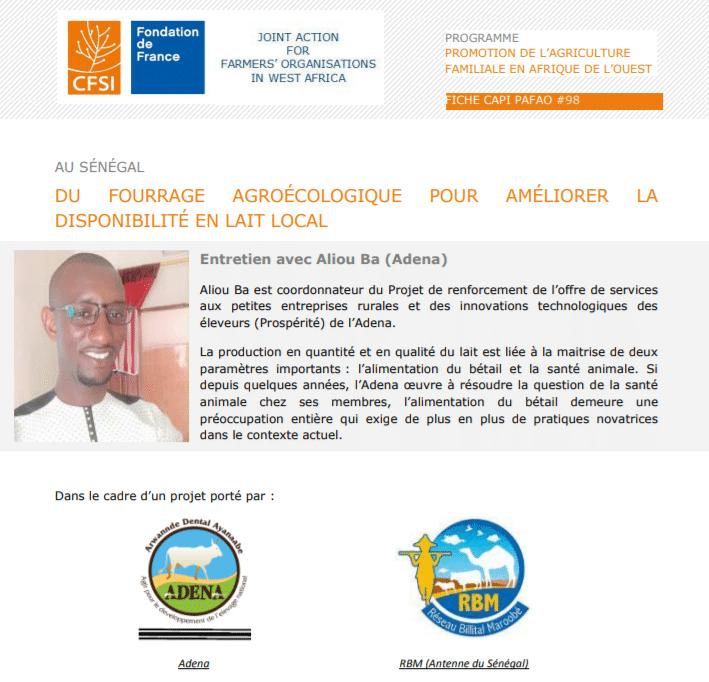 Entretien : Du fourrage agroécologique pour améliorer la disponibilité en lait local au Sénégal