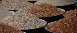 Actualité : Le Nigeria approuve la culture du niébé génétiquement modifié