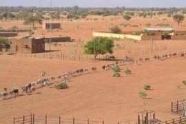 Bulletin de la situation pastorale au Sahel - mars 2019