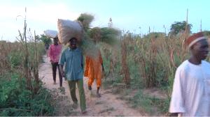 Vidéo : Paysans et finance agricole au Niger