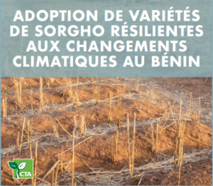 Rapport : Adoption de variétés de sorgho résilientes aux changements climatiques au Bénin
