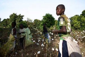 Article/vidéo : Mali