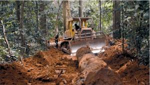 Rapport et vidéo : Commerce toxique - La criminalité forestière au Gabon et en République du Congo