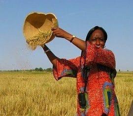 Rapport - Premiers résultats de l'observatoire mondial du soutien à l'agriculture : du grain à moudre pour les politiques