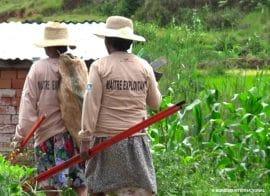 Film - Maîtres-Exploitants : un réseau de prestataires agricoles au service de leur territoire à Madagascar