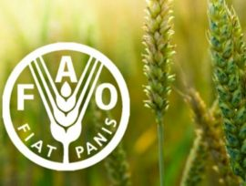 Entretien - L'agriculture familiale à la FAO: utopie ou réalité ?