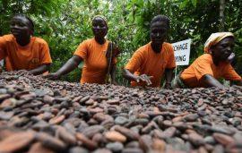 Articles : Menace sur le chocolat après la suspension des ventes de cacao du Ghana et de la Côte d'Ivoire