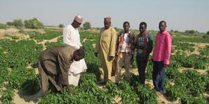 Atelier - débats :  Relancer le conseil agricole en Afrique subsaharienne ?
