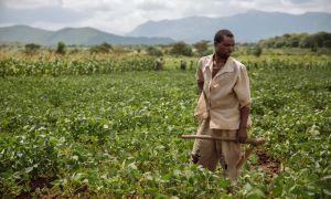 Webinar: Land tenure and perceived tenure security