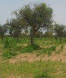 Opinion : Engager le Sénégal dans une transition agroécologique