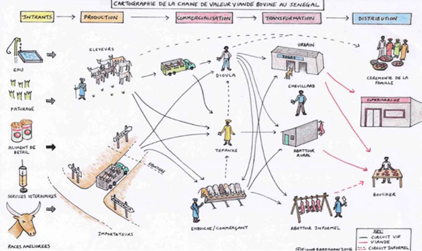 Note: Quelles voies de résilience pour la chaîne de valeur viande-bovine du Sénégal ?