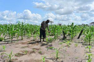 Chronique : Les investissements européens dans l'agriculture africaine ne doivent pas profiter qu'aux multinationales