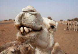 Article : En Mauritanie