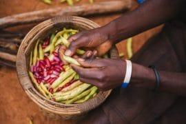Briefing de Bruxelles n°57 : Investir dans l'agriculture paysanne pour la sécurité alimentaire et la nutrition