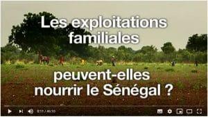 Vidéo : Les exploitations familiales peuvent-elles nourrir le Sénégal ?