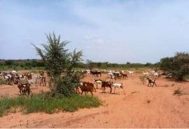 Bulletin de veille RBM :Situation pastorale en Afrique - août 2019