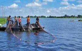 Article - Le commerce équitable du poisson pour renforcer la nutrition