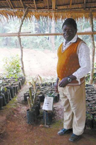 Etude de cas : Agroforesterie au Cameroun
