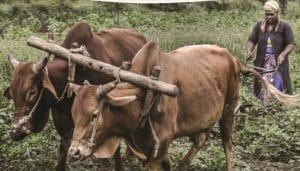 Rapport : Vers des politiques publiques orientées sur les petits producteurs et les petites productrices
