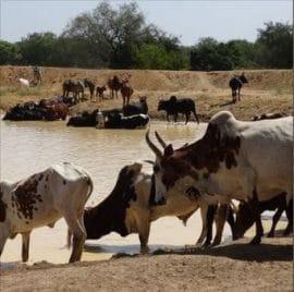 """Audio : Burkina - """"Les zones pastorales ont diminué avec l'insécurité"""""""