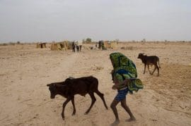 The cattle-conflict-climate change nexus on the Sudano-Sahel