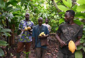Article : La chute du cours du cacao a un lien direct avec la pauvreté qui sévit en Afrique de l'Ouest