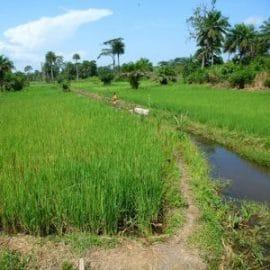 Article : Le projet SARA en Guinée - Une agriculture familiale plus résistante