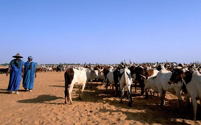 Brève : Le Togo opte pour le ranching pour sa campagne pastorale 2020