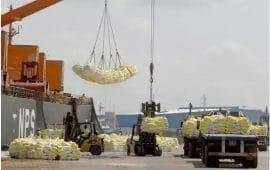 Article : Le long chemin de la Côte d'Ivoire vers l'autosuffisance en riz