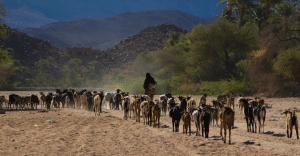 Brève - Le Bénin autorise la transhumance transfrontalière pour les éleveurs du Niger
