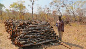 Article - L'agroforesterie accroît les revenus des petits exploitants