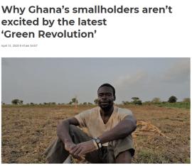 Analyse: Pourquoi les petits exploitants du Ghana ne sont pas enthousiasmés par la dernière «révolution verte»?