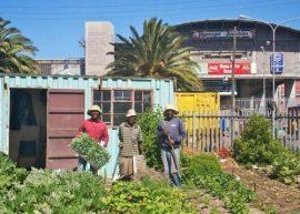 Entretien - L'agriculture urbaine en Afrique : entretien avec Paule Moustier (Cirad)