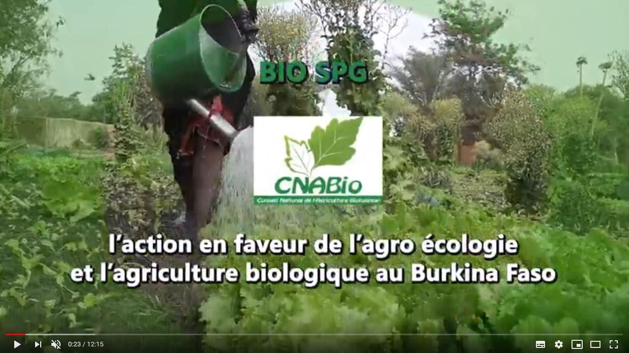 Vidéo - Le bio SPG, un système participatif pour des produits biologiques accessibles du Burkina