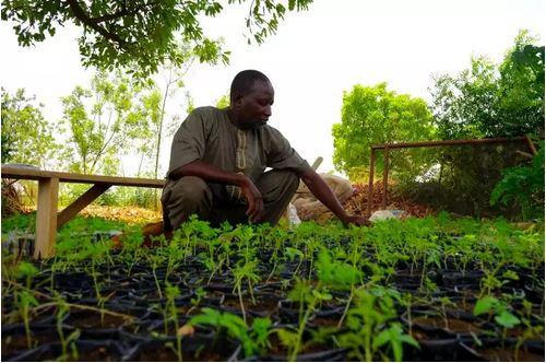 Reportage - Au Burkina Faso, une ferme agroécologique veut réinventer « le monde d'après »