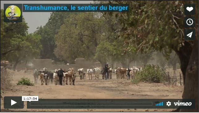 Film documentaire - Transhumance, le sentier du berger