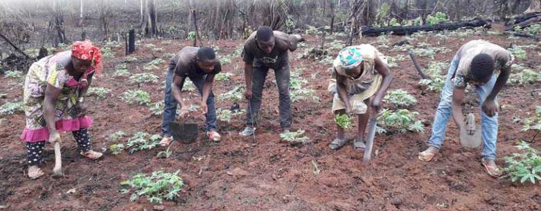 Bulletin de veille - Covid-19 : Pour une riposte adaptée au monde rural