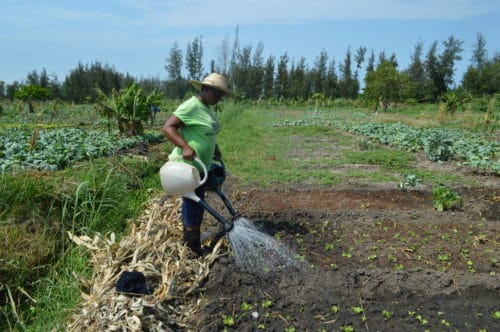 Article - What does a feminist understanding of irrigated farming mean? Reflections on my fieldwork