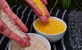 Article - Ghana: Rice Farmers Might Benefit From COVID Pandemic