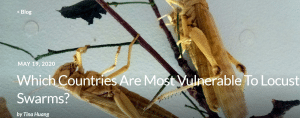 Article - Which Countries Are Most Vulnerable To Locust Swarms?