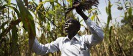 Entretien - Ibrahima Coulibaly : « L'agriculture à petite échelle peut nourrir nos pays  »