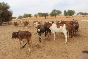 Témoignages - Réalisations du PRAPS au Sénégal