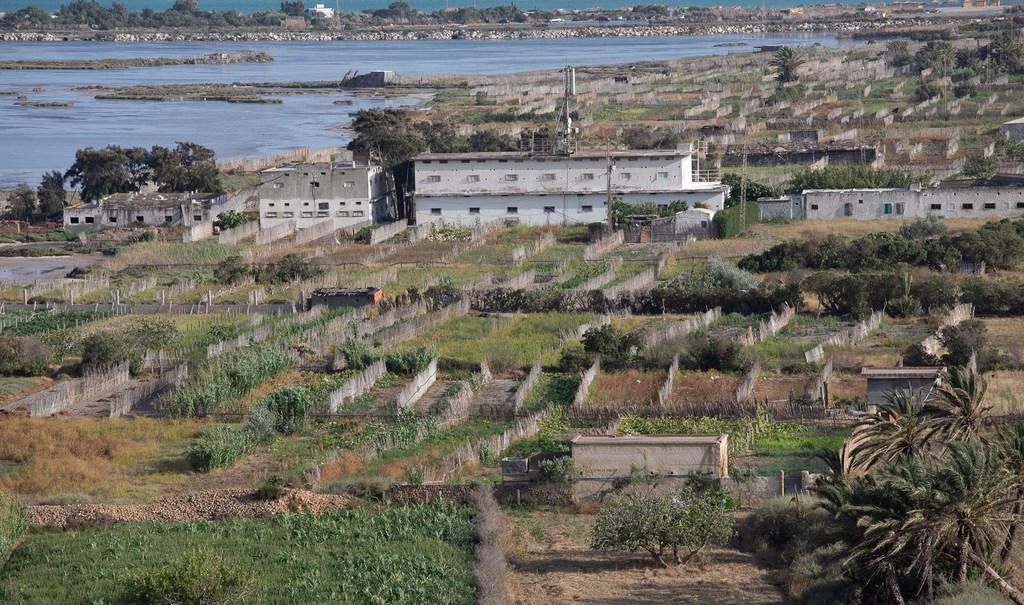 Article - Les systèmes agricoles tunisiens reconnus au patrimoine agricole mondial de la FAO