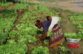 Article - Crise alimentaire et COVID-19 : de quelle relocalisation voulons-nous ?